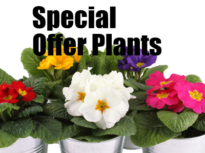 Special Offers Special Offers Plants