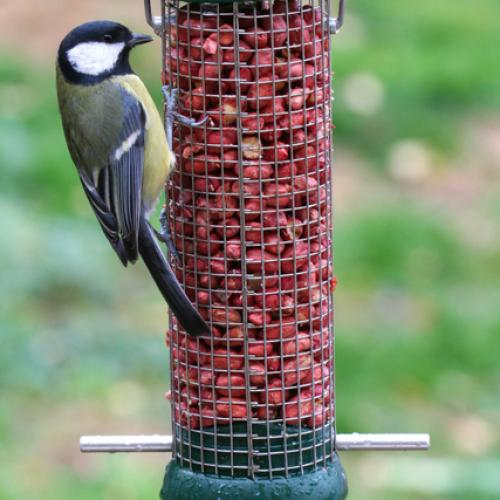 Pets & Birdcare Bird Tables & feeders