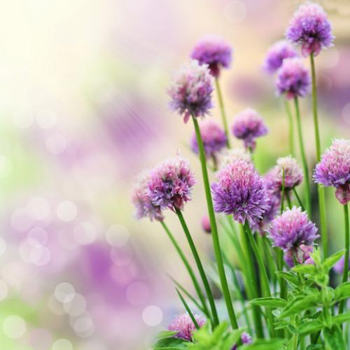 Outdoor Plants Herbs