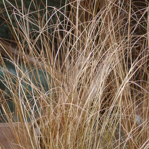 Outdoor Plants Grasses