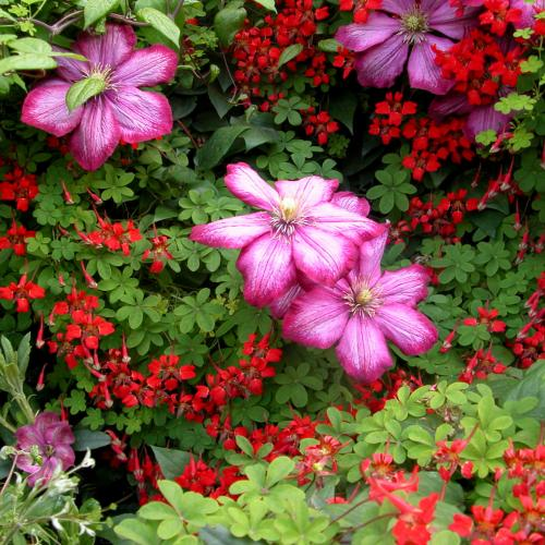 Outdoor Plants Climbers