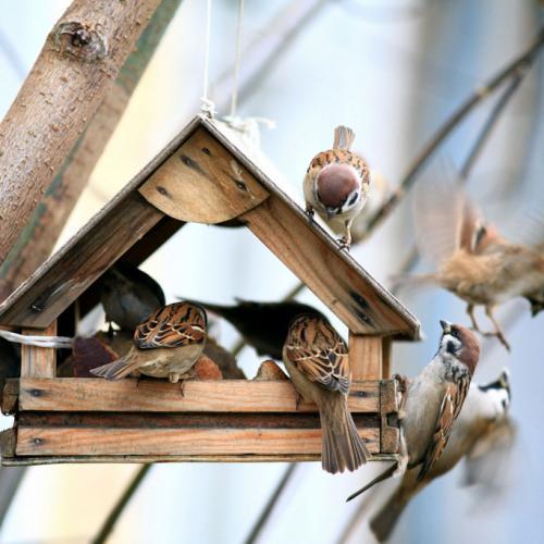 Pets & Birdcare Bird food