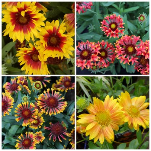 Outdoor Plants Herbaceous