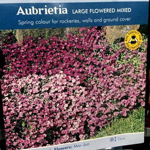 AUBRIETA Large Flowered Mixed