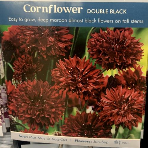 CORNFLOWER Double Black