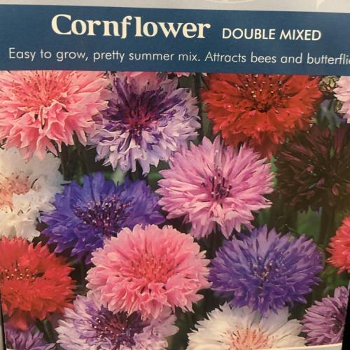 CORNFLOWER Double Mixed