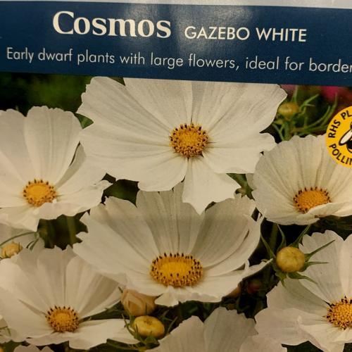 COSMOS Gazebo White