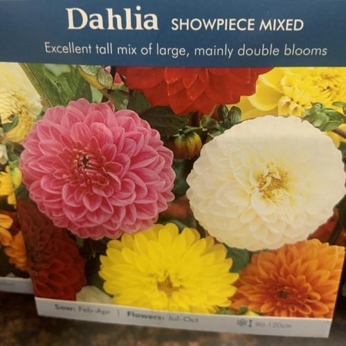 DAHLIA Showpiece Mixed