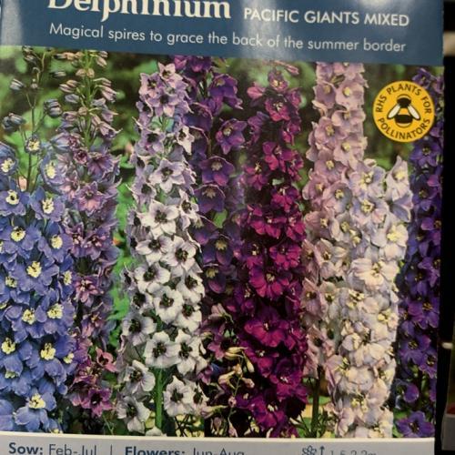 DELPHINIUM Pacific Giants Mixed