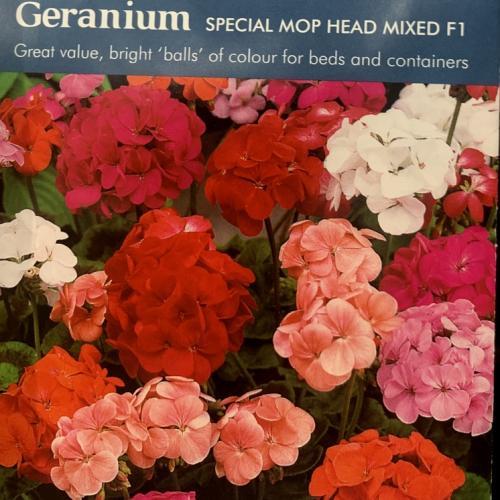 GERANIUM Special Mop Head Mixed F1