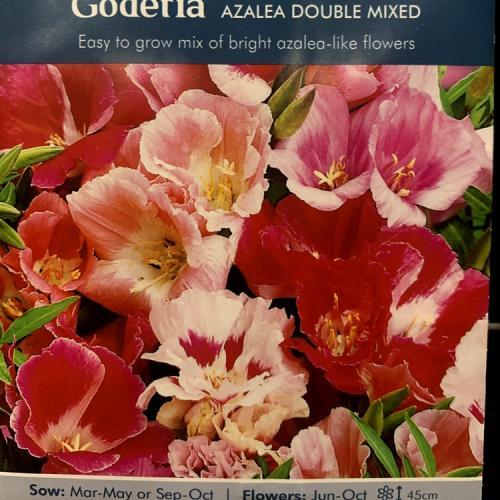 GODETIA Azalea Double Mixed