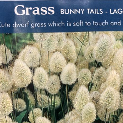 LG BUNNY TAILS GRASS