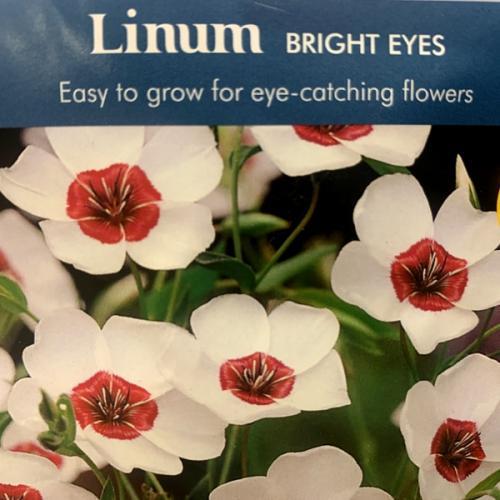 LINUM Bright Eyes