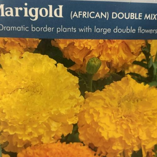 MARIGOLD (African) Double Mixed