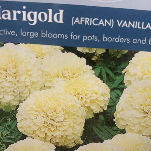 MARIGOLD (African) Vanilla F1