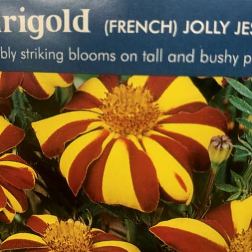 MARIGOLD (French) Jolly Jester