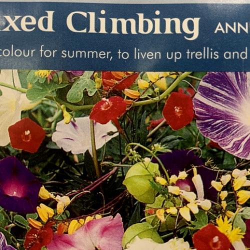MIXED CLIMBING Annuals