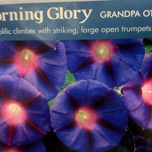 MORNING GLORY Grandpa Otts