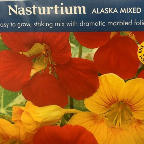 NASTURTIUM Alaska Tip Top Red