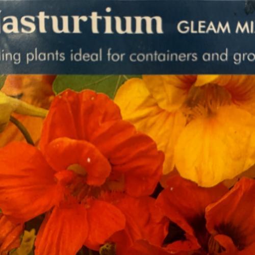 NASTURTIUM Gleam Mixed