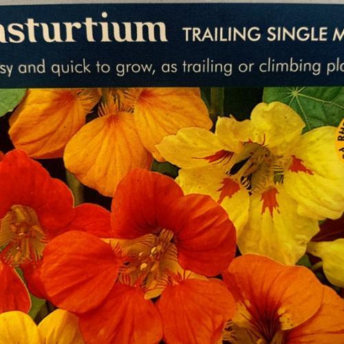NASTURTIUM Trailing Single Mixed