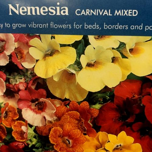 NEMESIA Carnival Mixed