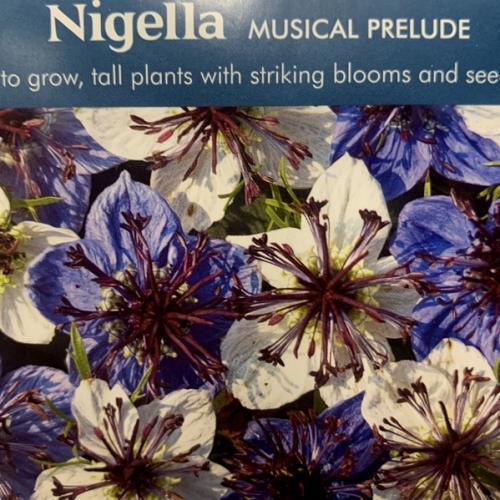 NIGELLA Musical Prelude