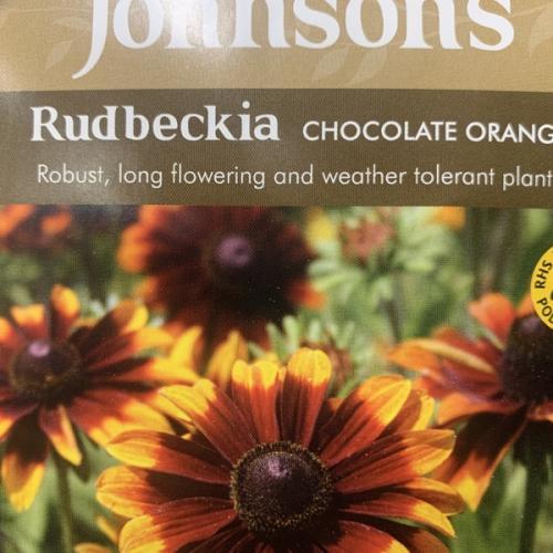 ORG RUDBECKIA Chocolate Orange