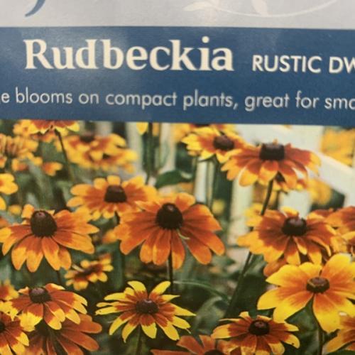 RUDBECKIA Rustic Dwarf