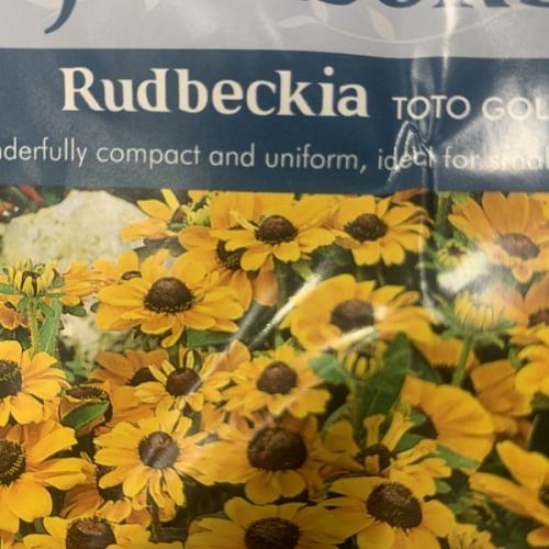 RUDBECKIA Toto Gold