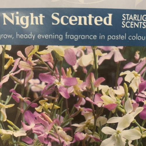 STOCK NIGHT SCENTED