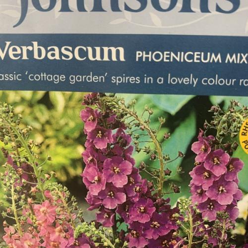 VERBASCUM phoeniceum Mixed