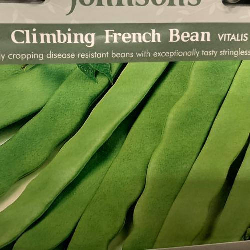 CLIMBING FRENCH BEAN Vitalis