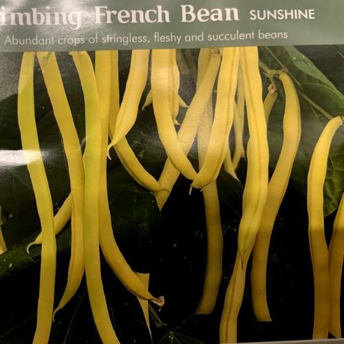 CLIMBING FRENCH BEAN Sunshine