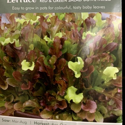 LETTUCE Red & Green Salad Bowl Mixed