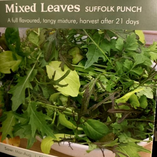 MIXED LEAVES Suffolk Punch