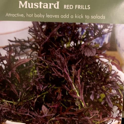 MUSTARD Red Frills