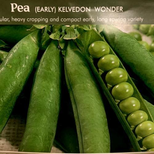 PEA Kelvedon Wonder
