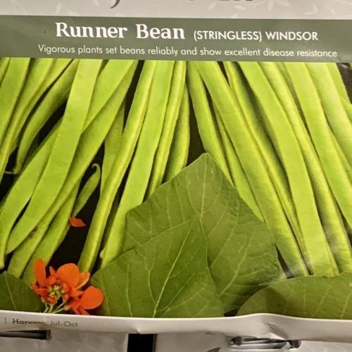 RUNNER BEAN Windsor (Stringless)