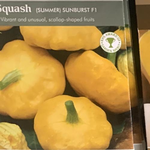 SQUASH (Summer) Sunburst F1