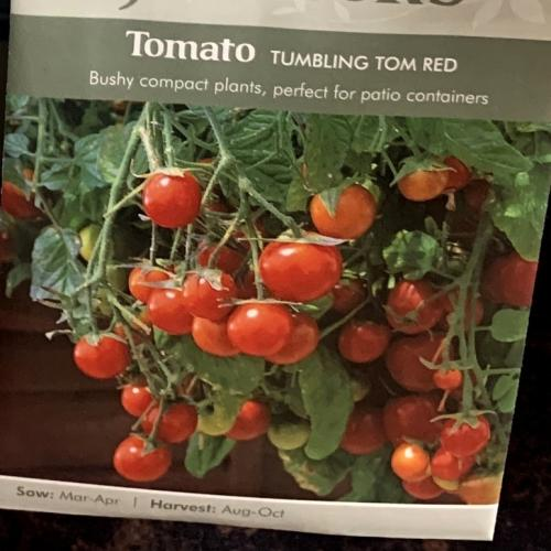 TOMATO Tumbling Tom Red (seeds)