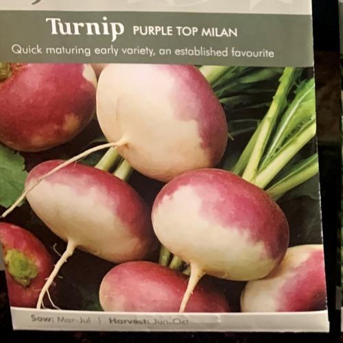 TURNIP Purple Top Milan