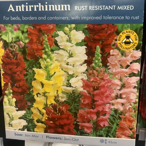 ANTIRRHINUM Rust Resistant Mixed