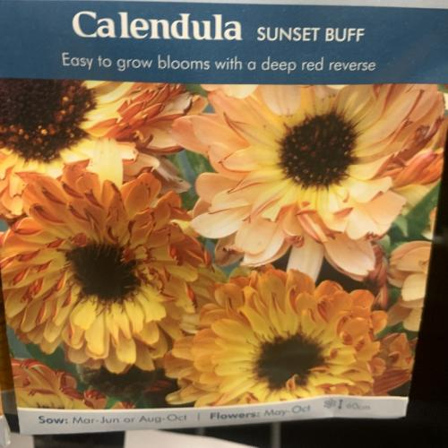 CALENDULA Sunset Buff