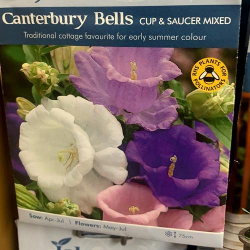 CANTERBURY BELLS Cup & Saucer Mixed