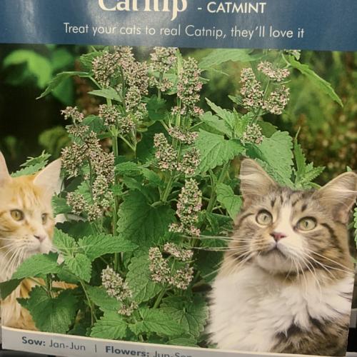 CATNIP - Catmint