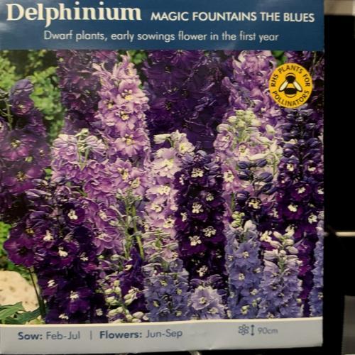 DELPHINIUM Magic Fountains The Blues