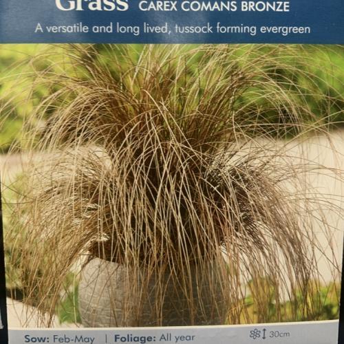GRASS Carex Comans Bronze