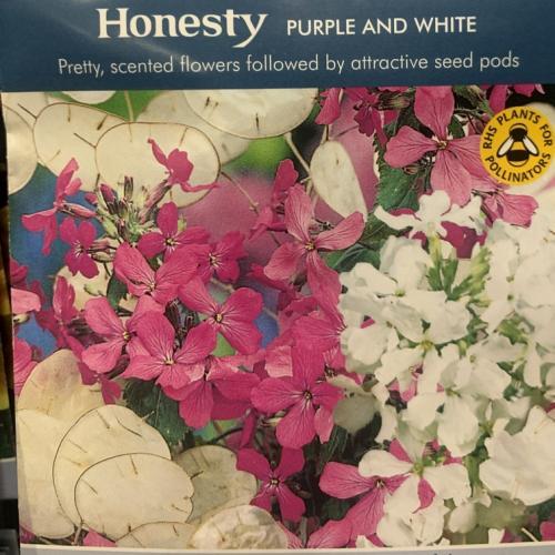 HONESTY Purple and White