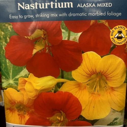 NASTURTIUM Alaska Mixed